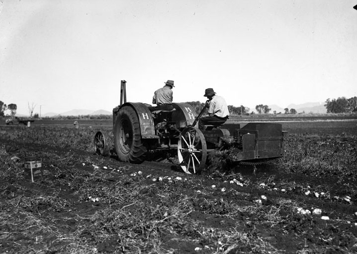 potato farmer Queensland
